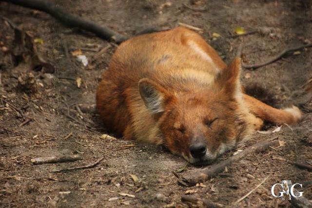 Zoo und Tierpark 03.06.201867