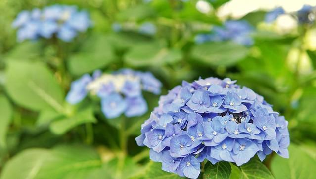 DSC09395-01花菜ガーデン