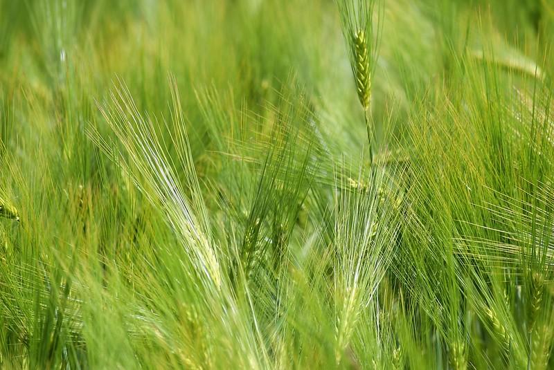 Crops 27.05 (1)