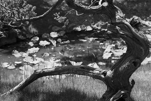 M monochrom tree