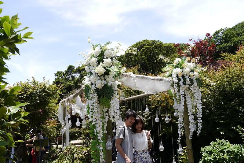 大梯田繡球花園