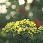 20180616-200538 Garden Flower Bokeh