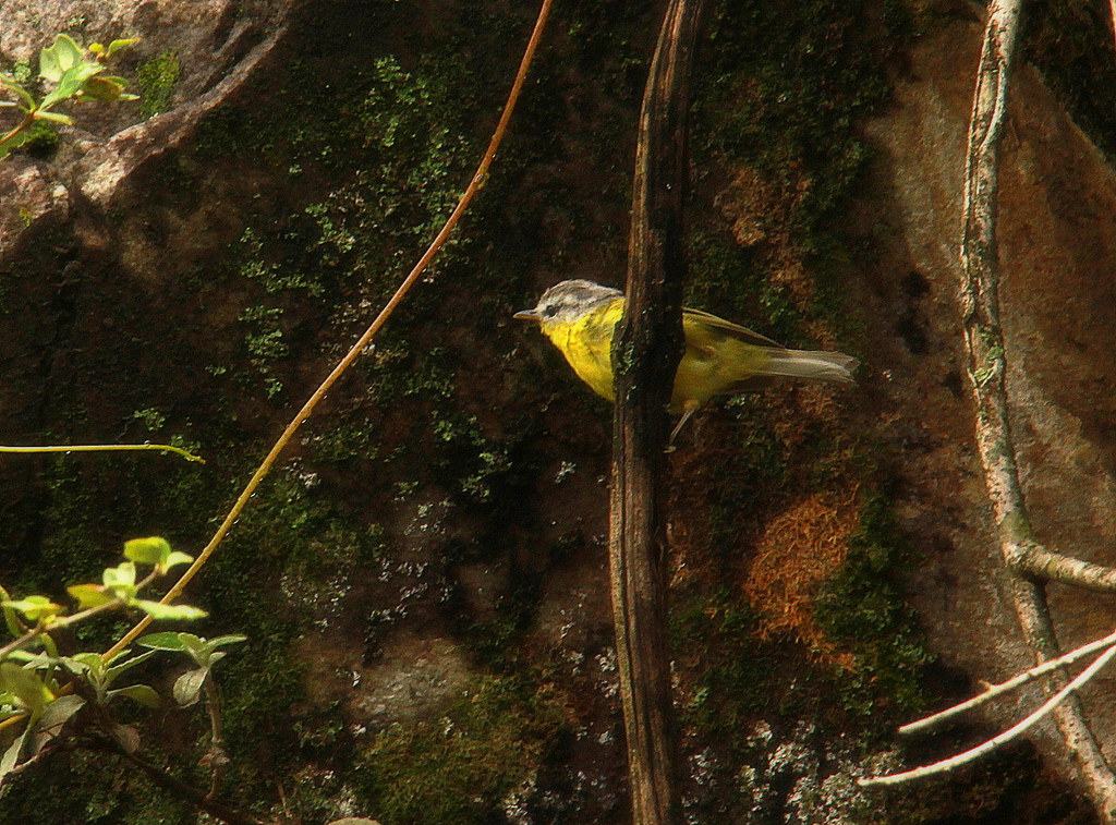 Ghangaria is a good bird watching destination