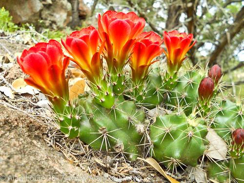 ussouthwest texas flowers landscape featuredbotanical burnet unitedstates us