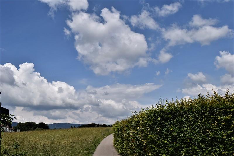 Feldbrunnen 08.06 (9)