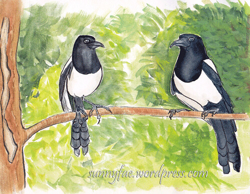 watercolour sketch of 2 magpies