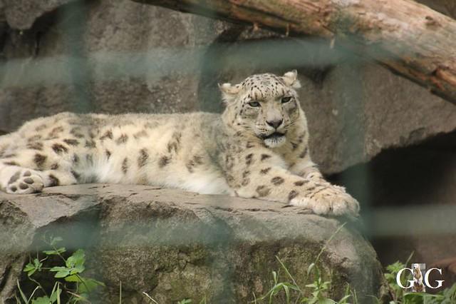 Zoo und Tierpark 03.06.201850