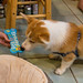 #ClarkTheCorgi first birthday