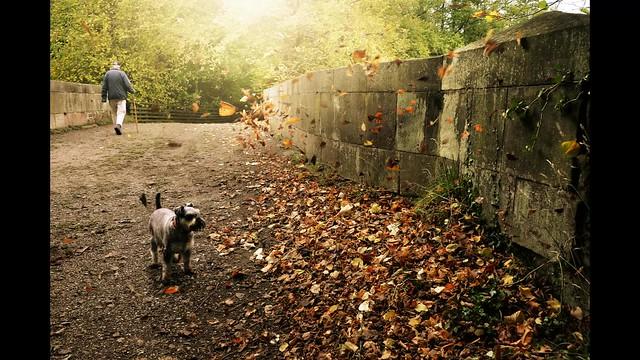 Chasing leaves