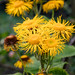 Scotland's Gardens Craigintinney Telferton July 2018 -115