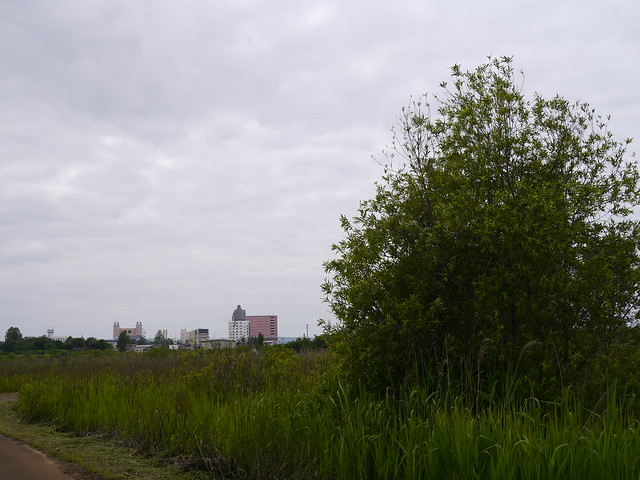 The border between green and the city
