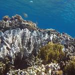 Indonesia Togian Islands (Sulawesi)