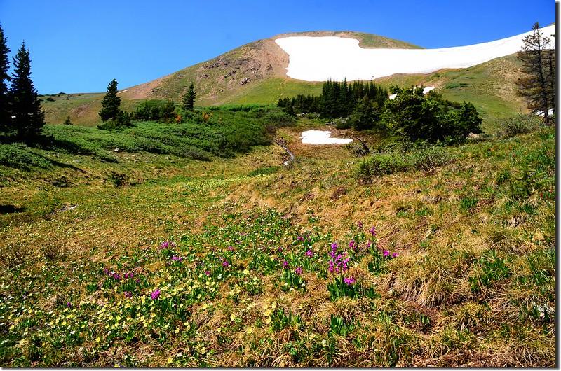 Wildfloowers along the trail