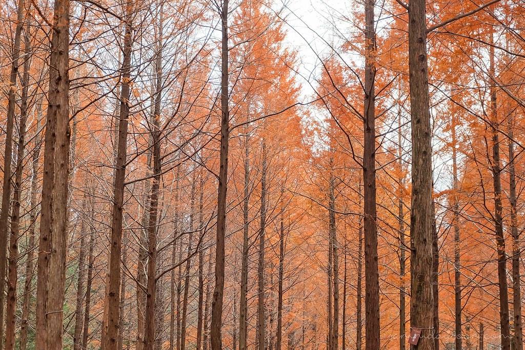 autumn_trees_nami_island
