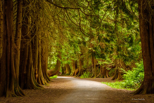 loughkey forestpark lough key forest park boyle roscommon ireland landscape redwood trees trail walking walk