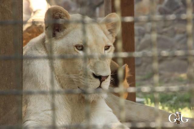Zoo Sosto 20.06.+21.06.201825