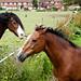 The Horses of Eltham Palace
