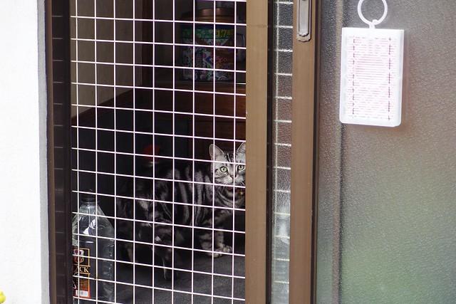 Today's Cat@2018-06-19