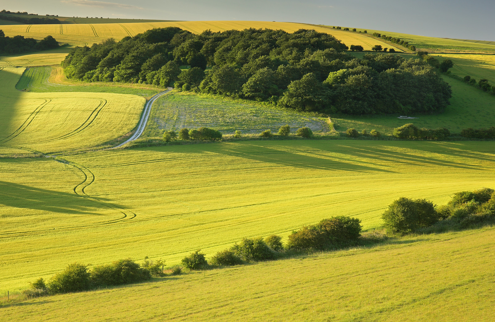 South Downs Valley
