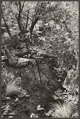Sabino Canyon IR #52 2018; Sabino Creek-Low Water