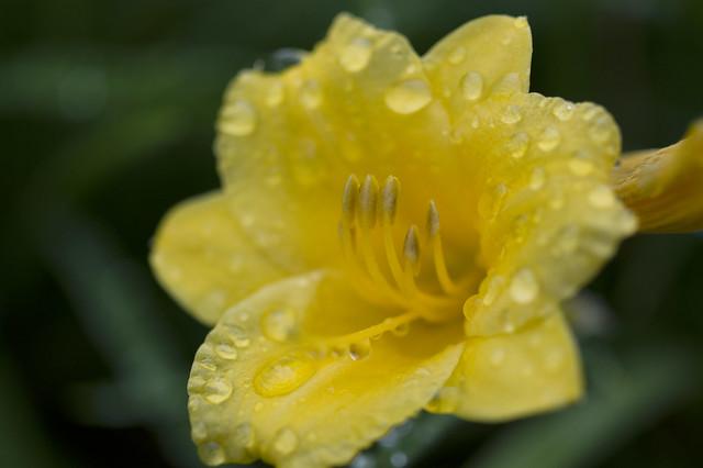 June 28 - delicate showers