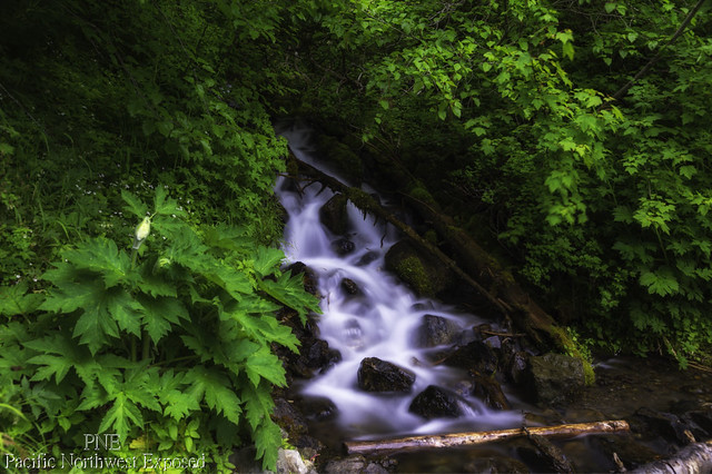 Wilderness Creek 0641