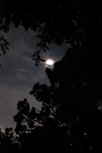 エレファントカシマシ 日比谷野外音楽堂 2018