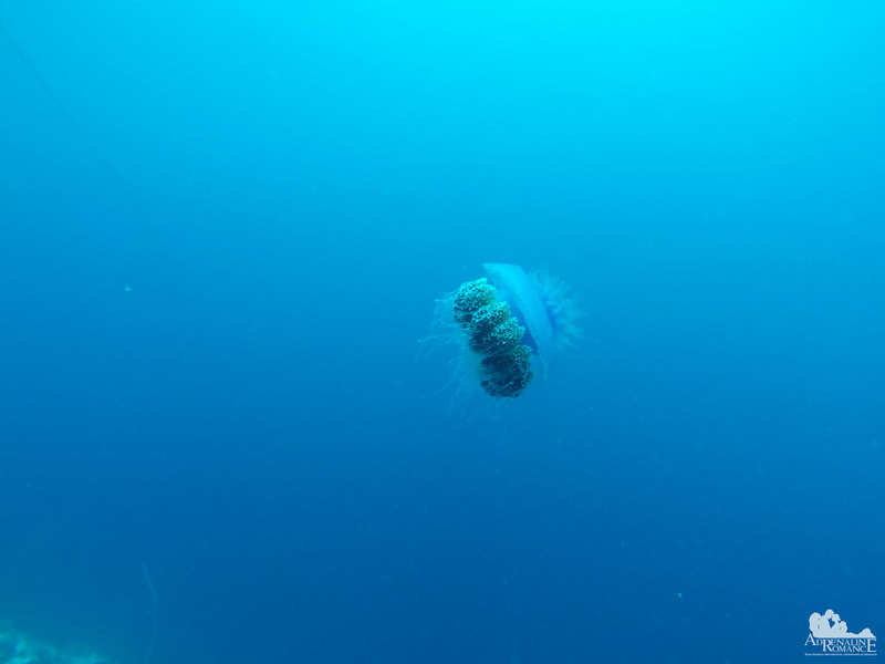 Big jellyfish!
