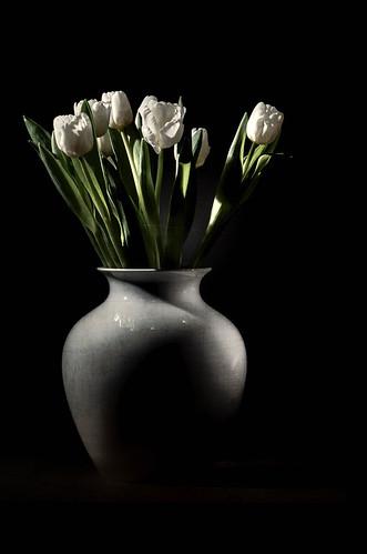 Ein Bund Tulpen - Tag 1