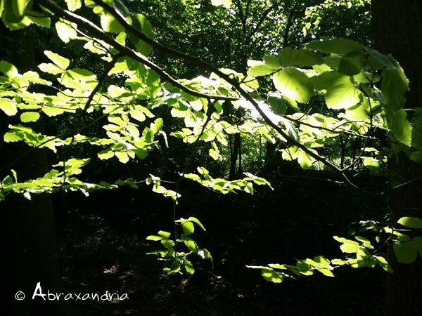 sommerwald4