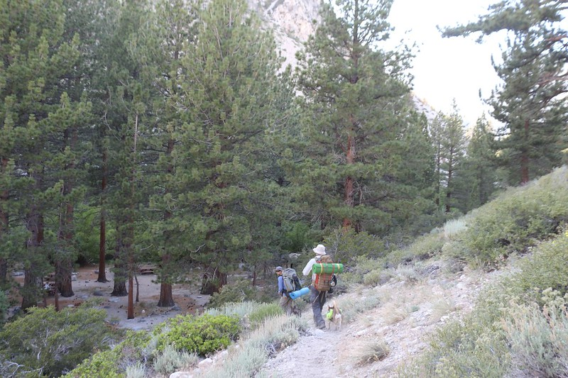 We descended into the Walk-In campground from the North Fork Big Pine Creek Trail