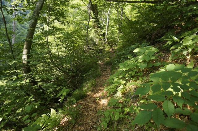 "A mountain trail ""ECHIZEN ZENJOUDOU"""