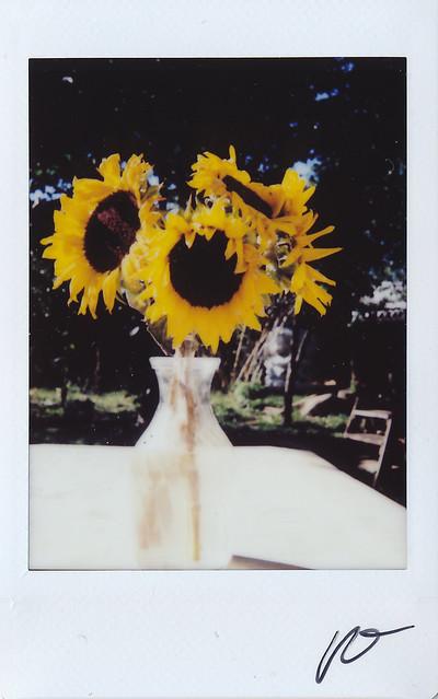 "Fujitiva_48 ""Sunflowers """