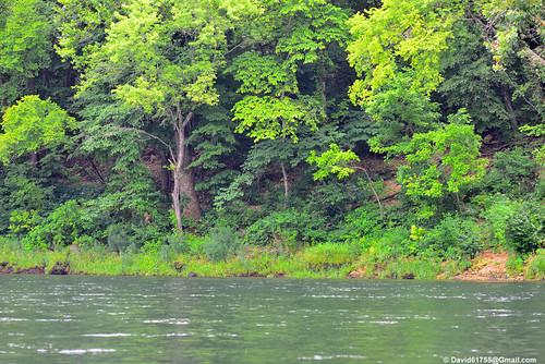 branson mo missouri vacation outdoor river tree tablerocklake geotag holuxm241 nikond800 2018