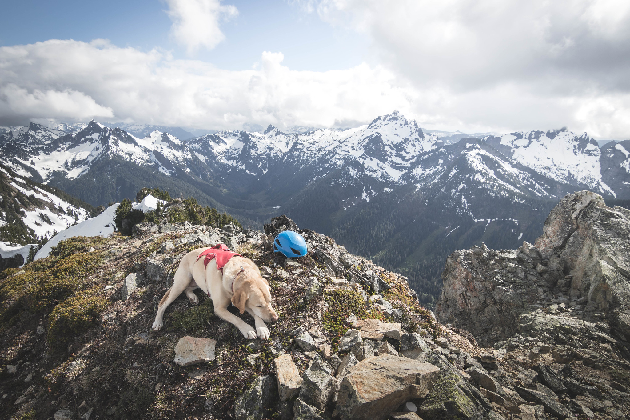 Summit dogs on Sheep Mountain