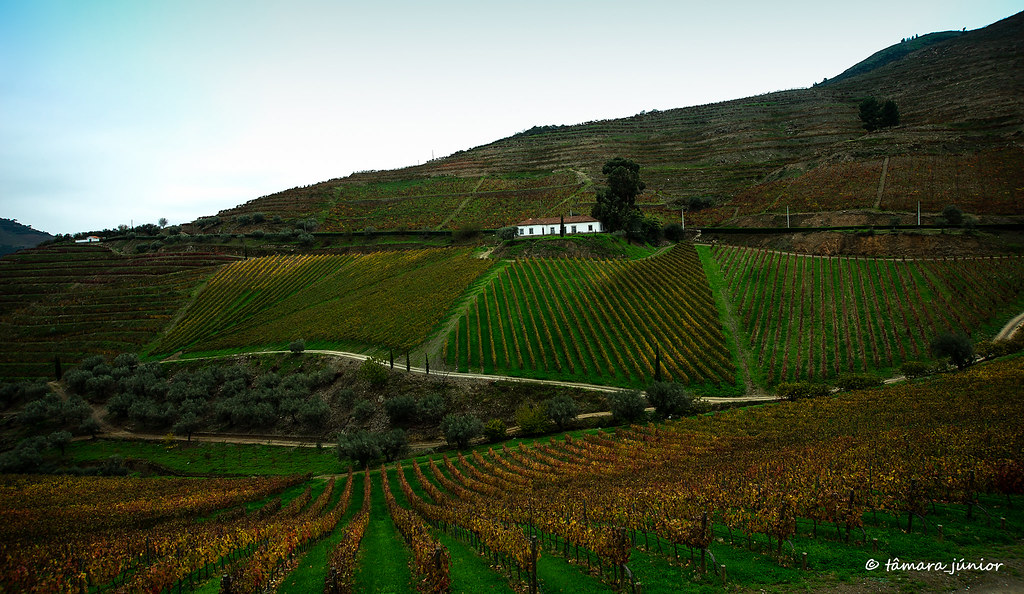 11.- 2015 - Outono no Douro Vinhateiro III (82)
