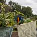 Scotland's Gardens Craigintinney Telferton July 2018 -127
