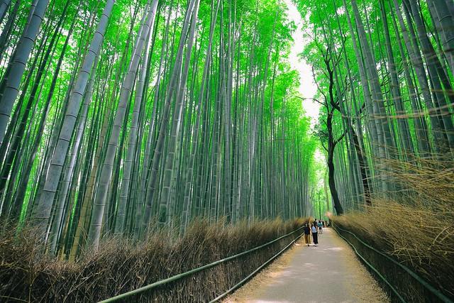 A Glimpse of Kyoto 一眼京都