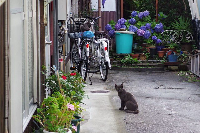 Today's Cat@2018-06-17