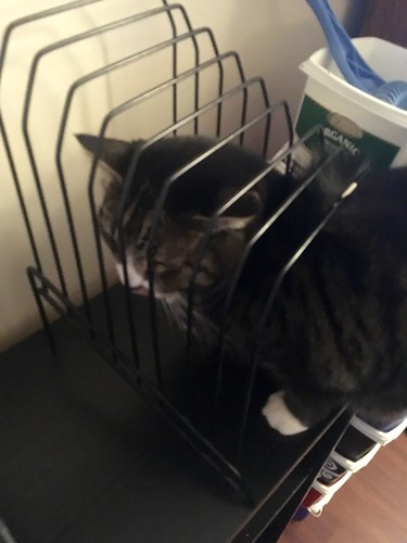 Watson exploring a file holder