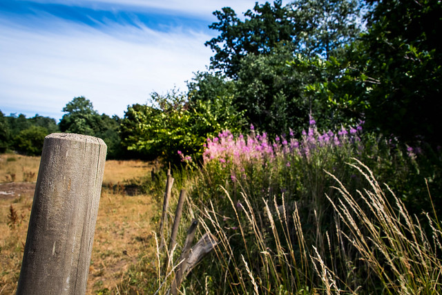 Countryside (explore 2018-07-17), Nikon D5500, AF-S DX Zoom-Nikkor 55-200mm f/4-5.6G ED