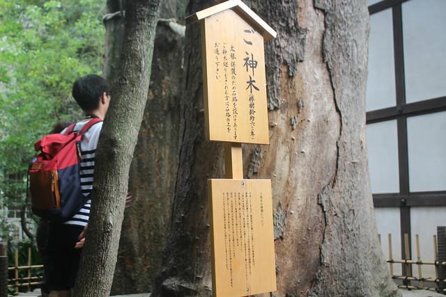 kawagoehikawa-gosyuin043