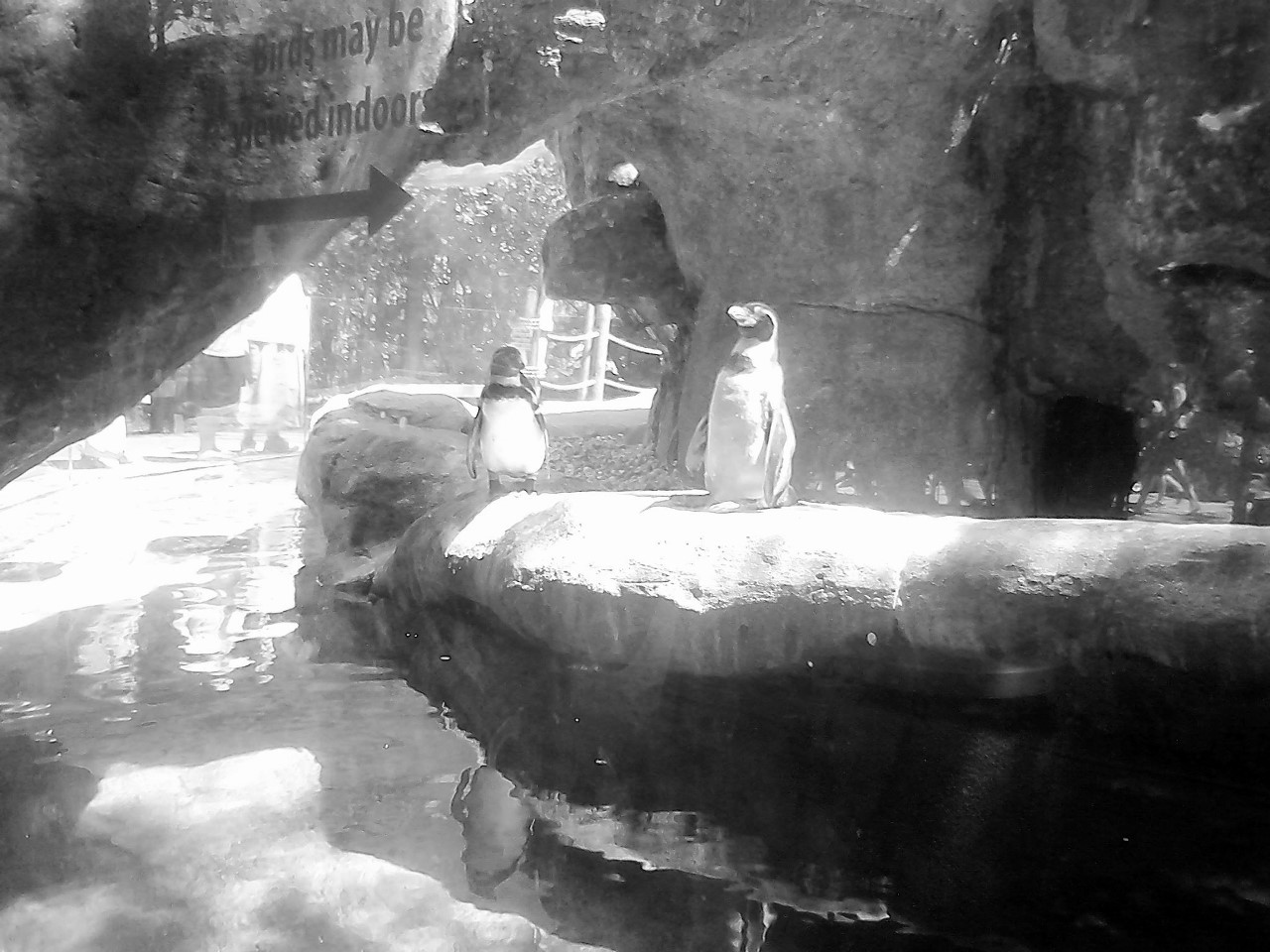 Columbus Zoo BW 5-31-2014 2-42-03 PM