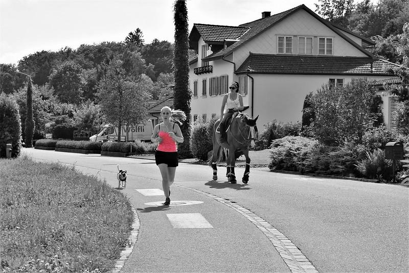 Horse 16.06 (3)