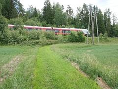 Prestegårdsskogen - Trostebekk gård gras-sti