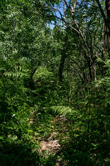 1807 Carter Canyon Trail