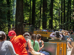 Dixiana Pulling Us through the Redwoods