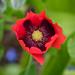 Scotland's Gardens Craigintinney Telferton July 2018 -88