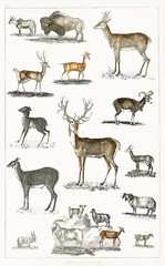 Collection of animal with antlers from A history of the earth and animated nature (1820) by Oliver Goldsmith (1730-1774). Digitally enhanced from our own original edition.