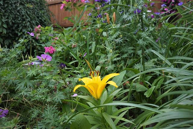 June flowers, overcast mid-day